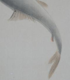 吉田白流 香魚(鮎)