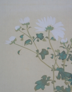 渡辺幾春 白菊